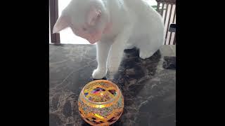 향초가 생전처음인 고양이의 반응 #향초 #캔들 #고양이