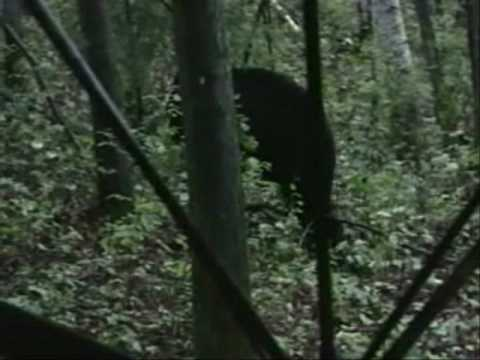 Just Pass'n Thru TV Alaska Bear hunting in ground blind- trailer