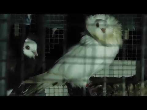 Pencinta burung di Brunei Darussalam