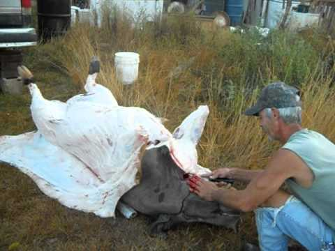 How to slaughter a pig Part 3: Skinning a hog