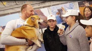 Фестиваль собак вельш-корги в Санкт-Петербурге