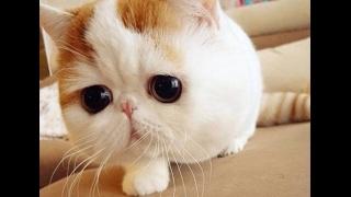 Японские фишки для котов
