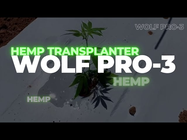 CHECCHI & MAGLI - WOLF PRO 3 ROWS for HEMP