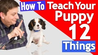 How Many Things Can you Teach your Puppy at Once?