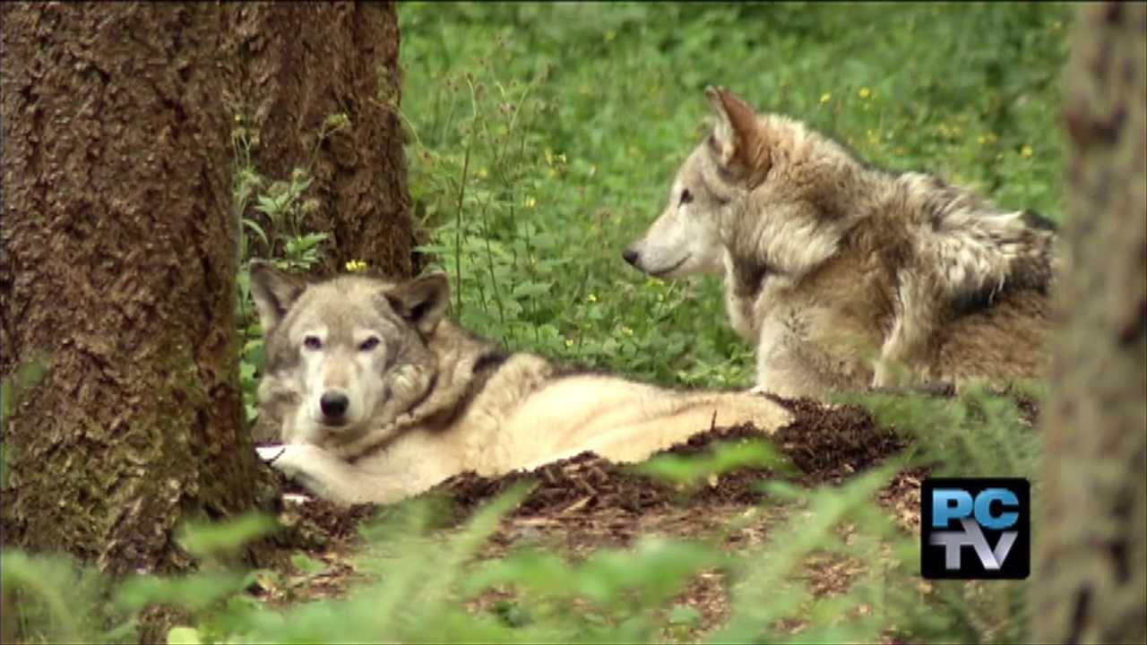 Grant Challenge For Wildlife On Wheels Project Memorial Held