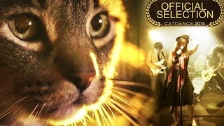 Does Your Cat Watch You All The Time Too? - A Cat Music Video