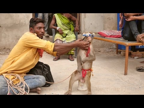 Bandar.Monkey Dance Funny Drama in India.Comedy Bandar ka khel.कॉमेडी बन्दर का खेल,मदारी.Madari