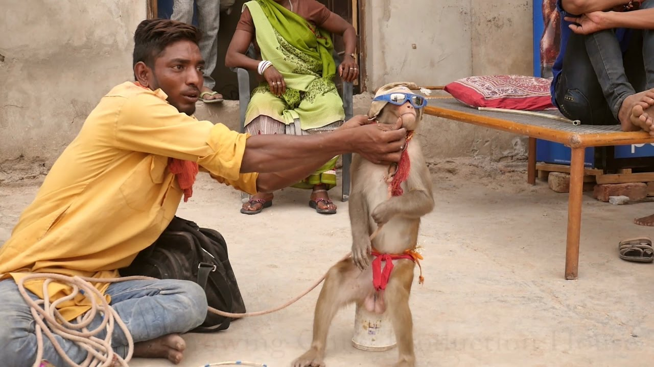 Humorous Monkey Drama in India.Comedy Bandar ka khel.कॉमेडी बन्दर का खेल,मदारी.Madaari tamasha humorous
