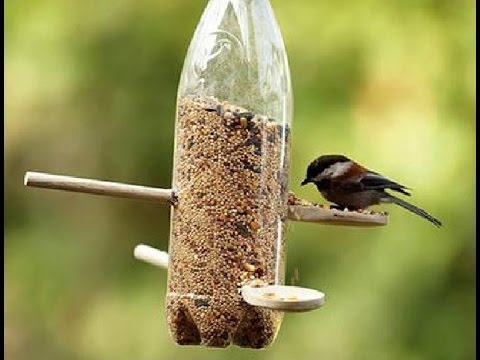 bird food & watering Gardening Sekho in Hindi/Urdu  Gardening Sekho in Hindi/Urdu