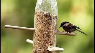bird food & watering Gardening Sekho in Hindi/Urdu
