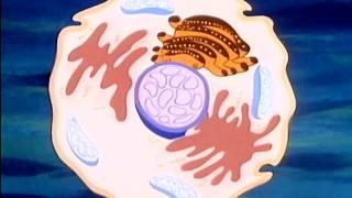 Жила-была жизнь, 1 серия - Планета клеток. Альбер Барийе, 1987