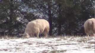 Śmierć pod śniegiem. Zwierzęta giną pod śniegiem!!!!!!!!