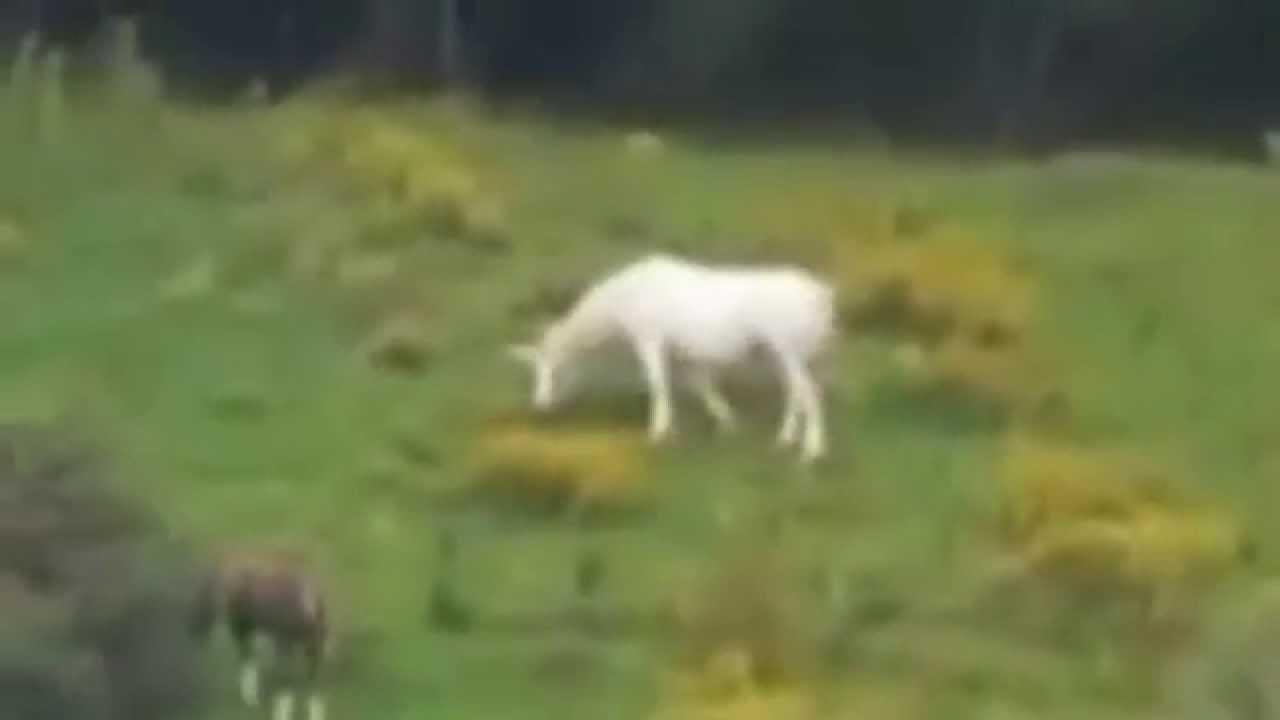 Real Unicorn Sighting