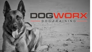 Train Any Dog | Best Savannah, Ga Dog Trainer | Dogworx