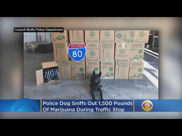 Police Dog Sniffs Out 1,500 Pounds Of Marijuana During Routine Traffic Stop