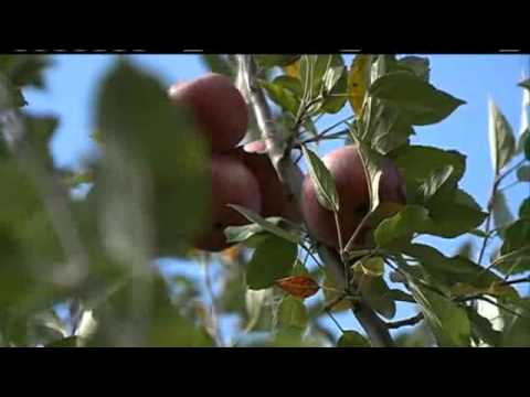 Apple Grower Escapes Mother Nature's Wrath
