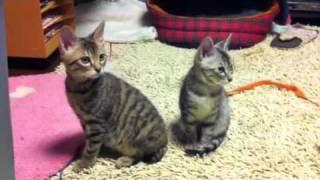地震に緊張が走るチビ猫たち