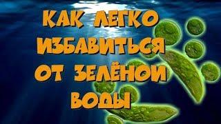зеленая вода в аквариуме. Эвглена зеленая и как от нее избавиться