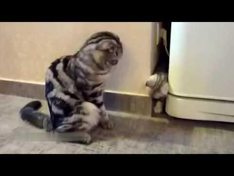 приколы про котов короткие