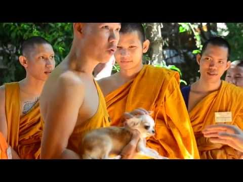 Temple cats and dogs: Humane care training for monks