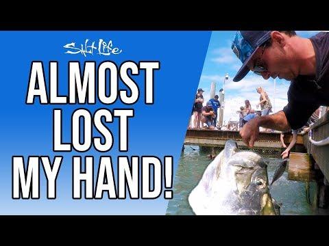 I Almost Lost My Hand Feeding Tarpon   Salt Life