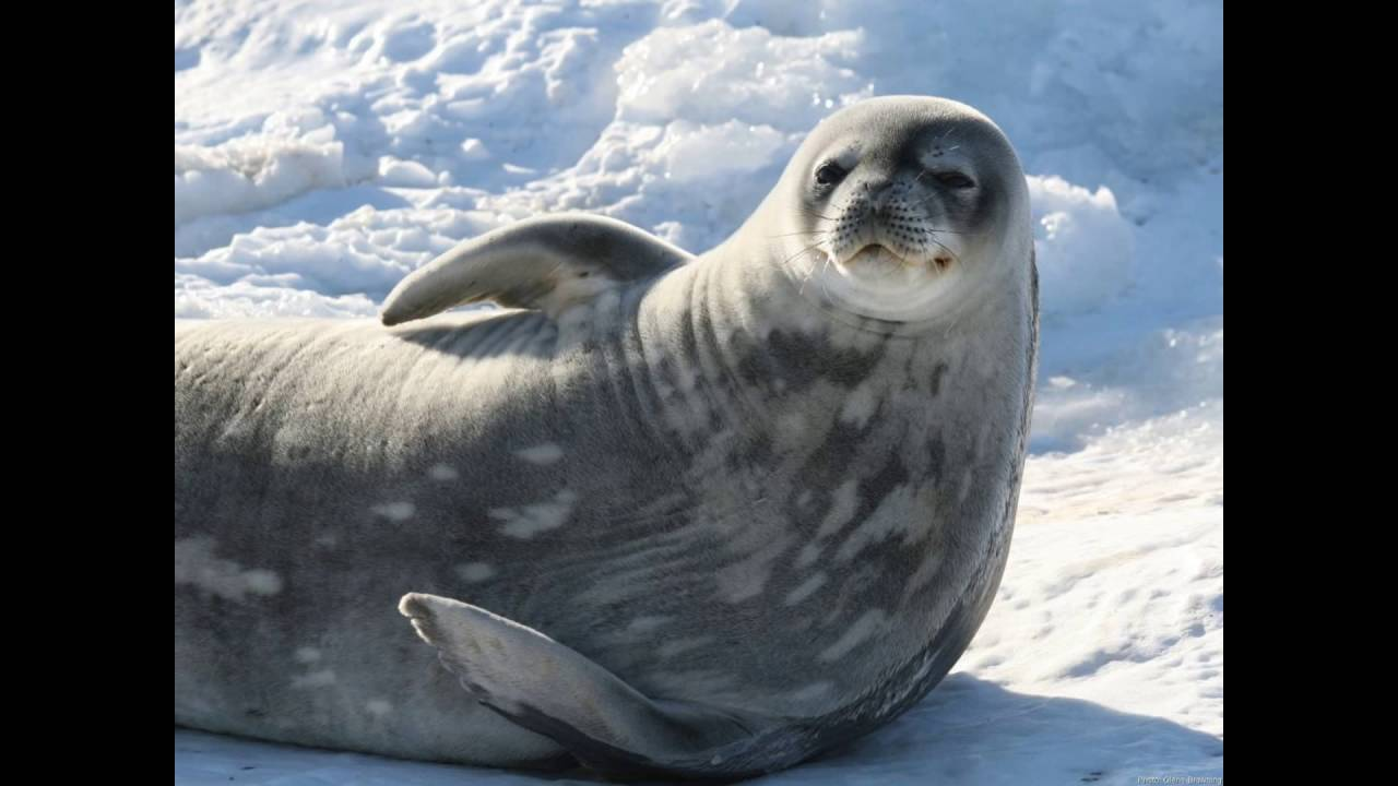 funny seal montage part one - YouTube