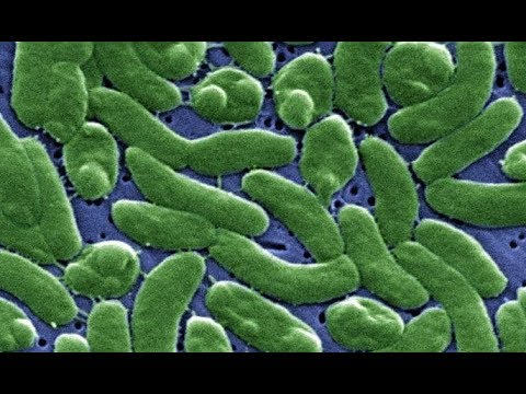 Vibrio vulnificus: An interview with Dr Judy Stone