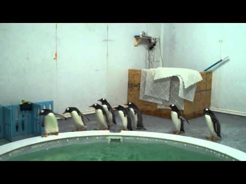 The Stars Of Mr. Poppers Penguins