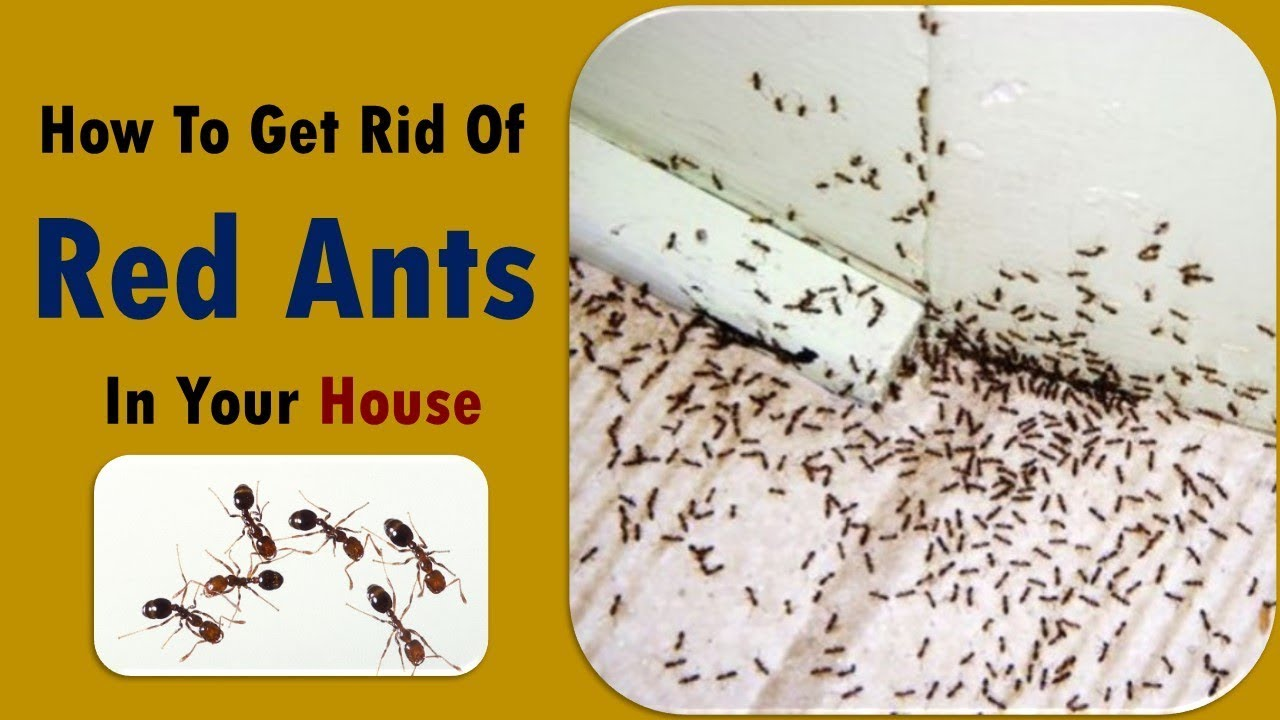 How to get rid of ants in the house naturally house plan for How to get building plans for your house