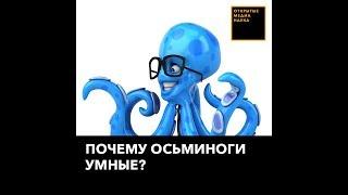 Почему осьминоги умные?