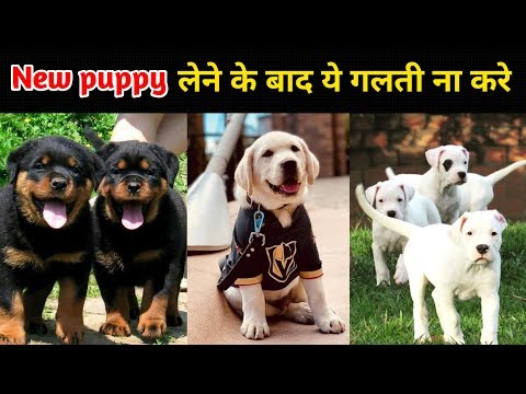 Things that remember after a Puppy / New puppy लेने के बाद ये गलती ना करे