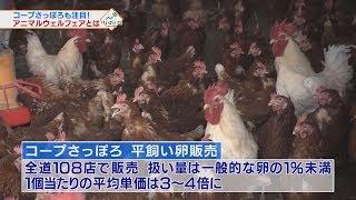 「アニマルウェルフェア」って何?生産者・消費者にとって、どんなメリットが?課題は? #けいざいナビ #テレビ北海道 http://www.tv-hokkaido.co.jp/ne...