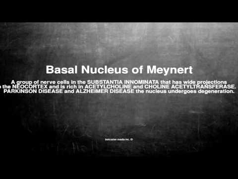 Medical vocabulary: What does Basal Nucleus of Meynert mean