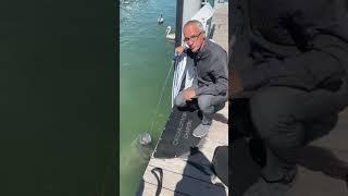 Морская корова во Флориде