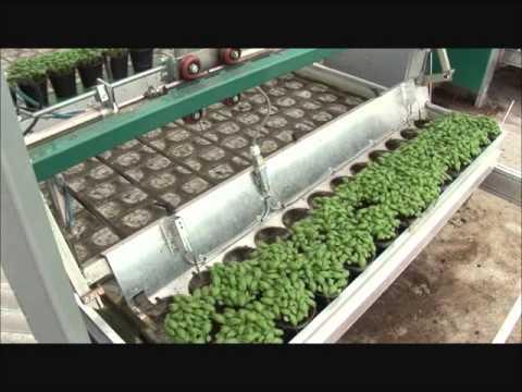 Gartenbaubetriebe  Keimzelle für Gartenbaubetriebe - YouTube