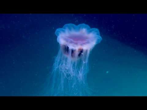 Windows To The Deep 2018: Jellyfish