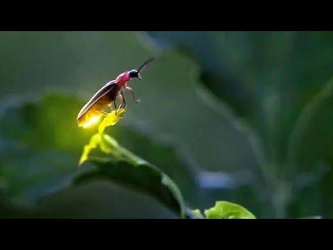Yaadon ke sab jugnu jungle mein rehte hain whatsapp status song|Kumar Sanu|Love songs status|