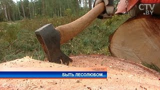 «Приехали из Минска, подменят нас немножко»: как корреспондент СТВ Ольга Осадчая лес валила