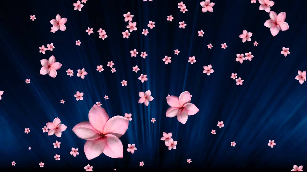 Good #004 Pink Flowers Fall In Blue   YouTube