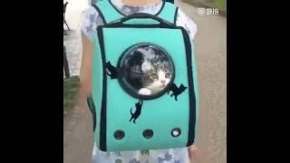 Кошачий рюкзак ..вещь!