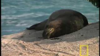 Monk Seal Mystery - Northwest Hawaiian Islands