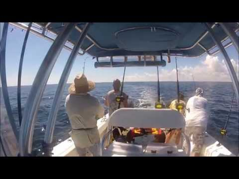 Mahi / Black Fin Tuna ~ Stuart Florida Offshore Fishing 10/03/2014