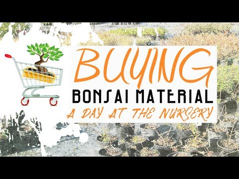 BUYING BONSAI MATERIAL - A Day At The Nursery (Interview) - YouTube