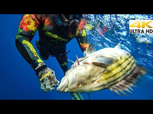 H ΜΕΓΑΛΗ ΣΤΗΡΑ🔱ΕΝΑ ΩΡΑΙΟ ΨΑΡΙ ΗΤΑΝ ΑΡΚΕΤΟ | Spearfishing Life 🇬🇷 [4K]✅