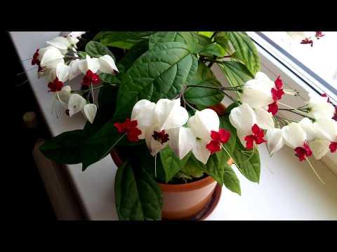 Вопрос: Какой топ 10 самых лучших растений для декорирования границ сада?