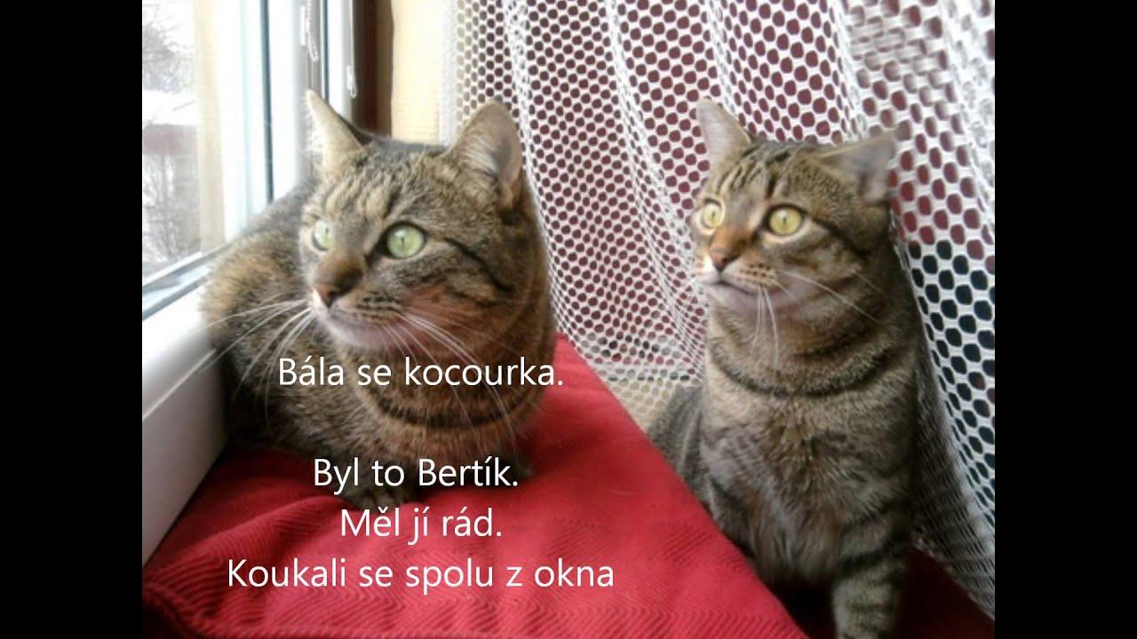 18 kočička videa
