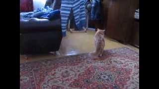 Кот гоняет кошку!!!!!!!!!!!