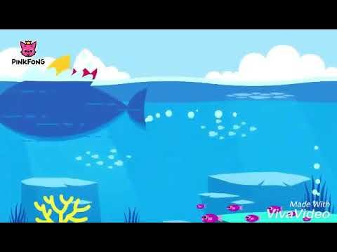 BABY SHARK x BUDOTS REMIX
