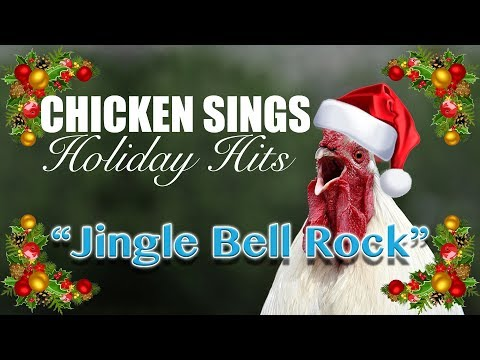 Chicken Singing Christmas/Holiday: Jingle Bell Rock