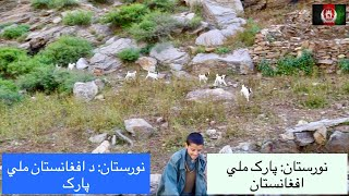 Life of an Afghan shepherd Nuristan Province | The National Park of Afghanistan